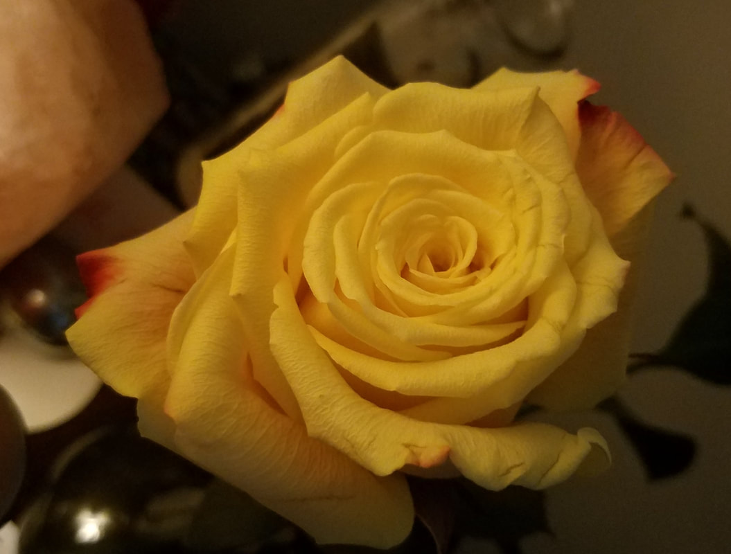 Yellow Rose By Pamela Llano